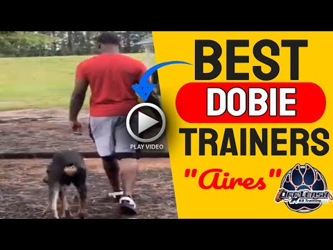 Jacksonville NC Dog Trainers - Doberman Aires Bouncy and Busy to Off Leash and Under Control!