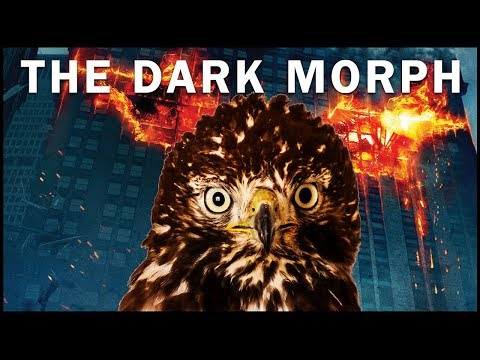 The Dark Morph Red Tailed Hawk | Rescue, Recovery and Back to the Wild!