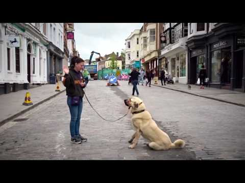 Ice - Anatolian Shepherd - 4 Week Residential Dog Training at Adolescent Dogs