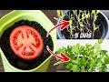 🍅🍅 TIENES QUE VERLO: Cómo Sembrar Tomates en Casa | Germinar Tomates Cherry |Plantar Tomates