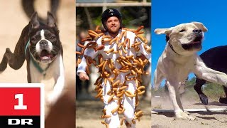 Pølsedragt vs. hunde | Alle mod 1 | DR1