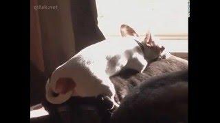 Коврик для собаки