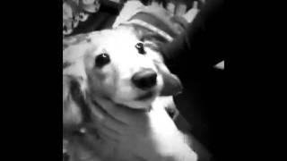 我が家の犬がペロペロしてくれるんだ。