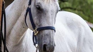 Equine Aromatherapy