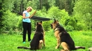 Очень важные животные. Кошка и собаки Николая Захарова.