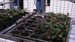 Pic-O-Mat PF Transplanter & Mayer 2400 potting machine - Visser Horti Systems