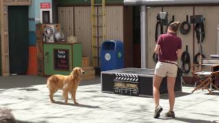 Amazing Animal Actors Show in Full Universal Studios Hollywood Theme Park California Los Angeles
