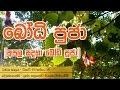 Bodhi Poojawa Kavi Gatha - Buddhist Puja Chantings By Hapugoda Priyankara Thissa Thero