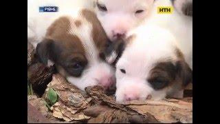 В Ровно жестоко травят собак