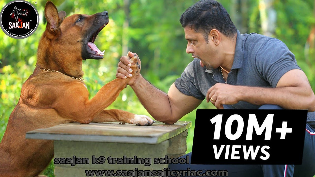 Dog Training School In Puerto Rico