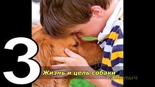 Жизнь и цель собаки | Брюс Кэмерон  3 из 7