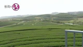 静岡のチカラ#41 タイ・チェンライの茶畑、茶工場 丸善製茶
