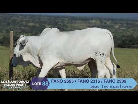 LOTE 88 FANO 2695 X 2316 X 2309