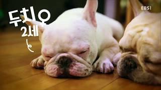 세상에 나쁜 개는 없다 - 성난 불도그의 혈투_#001
