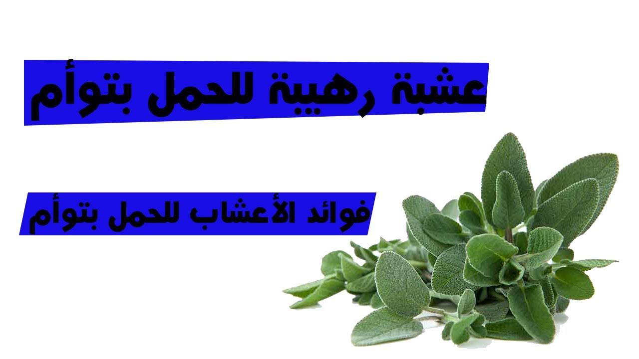 فوائد الأعشاب للحمل بتوأم عشبة رهيبة للحمل بتوأم Youtube