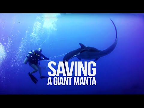 Tangled Manta Ray asks for diver's help - Ghost Fishing - Costa Rica