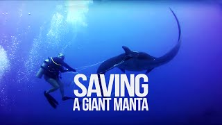 Tangled Manta Ray asks for diver