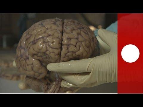 musica y cerebro pdf