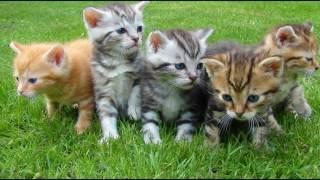 Смотреть котят, мягкие маленькие комочки