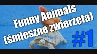Funny Animals (śmieszne zwierzęta) #1 - PatrykOJ