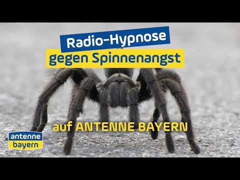 Radio-Hypnose gegen Spinnenangst | ANTENNE BAYERN