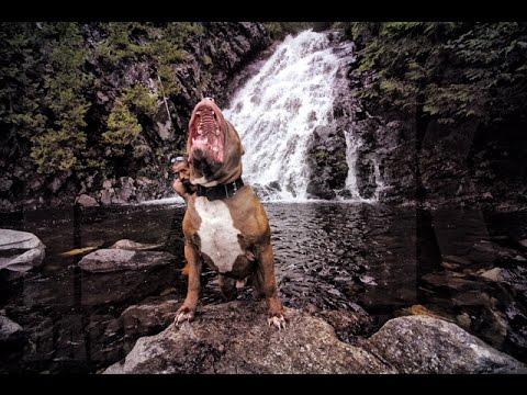 THE HULK LIFE: DOG DYNASTY I TALK TO MY DOGS