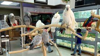 DUBAI BIRDS AND PETS MARKET