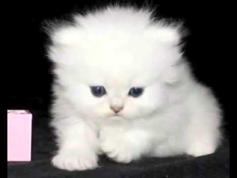 El gato gordo - 2 10