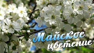 Сказочно-красивое МАЙСКОЕ ЦВЕТЕНИЕ и Потрясающая музыка !!!