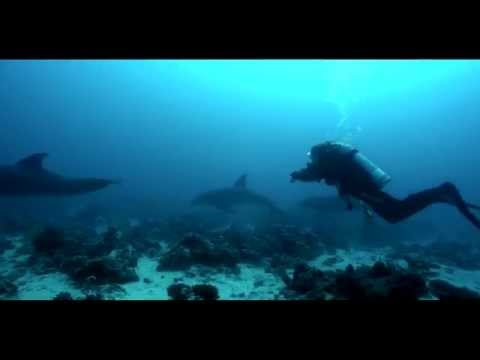 DIVING WITH OCEANIC - Red Sea