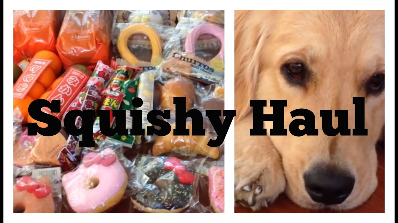 HUGE SQUISHY HAUL!!! ft. My Dog - YouTube
