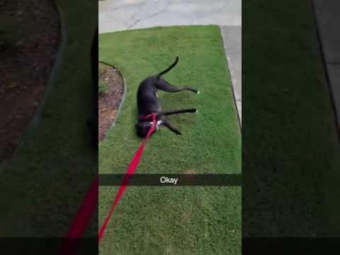 """Walking"" the Dog"