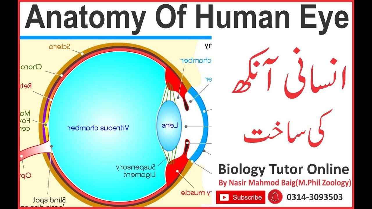 Anatomy of human eye with description in urdu - YouTube