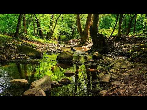 Forest Walk Meditation for Renewal and Encouragement