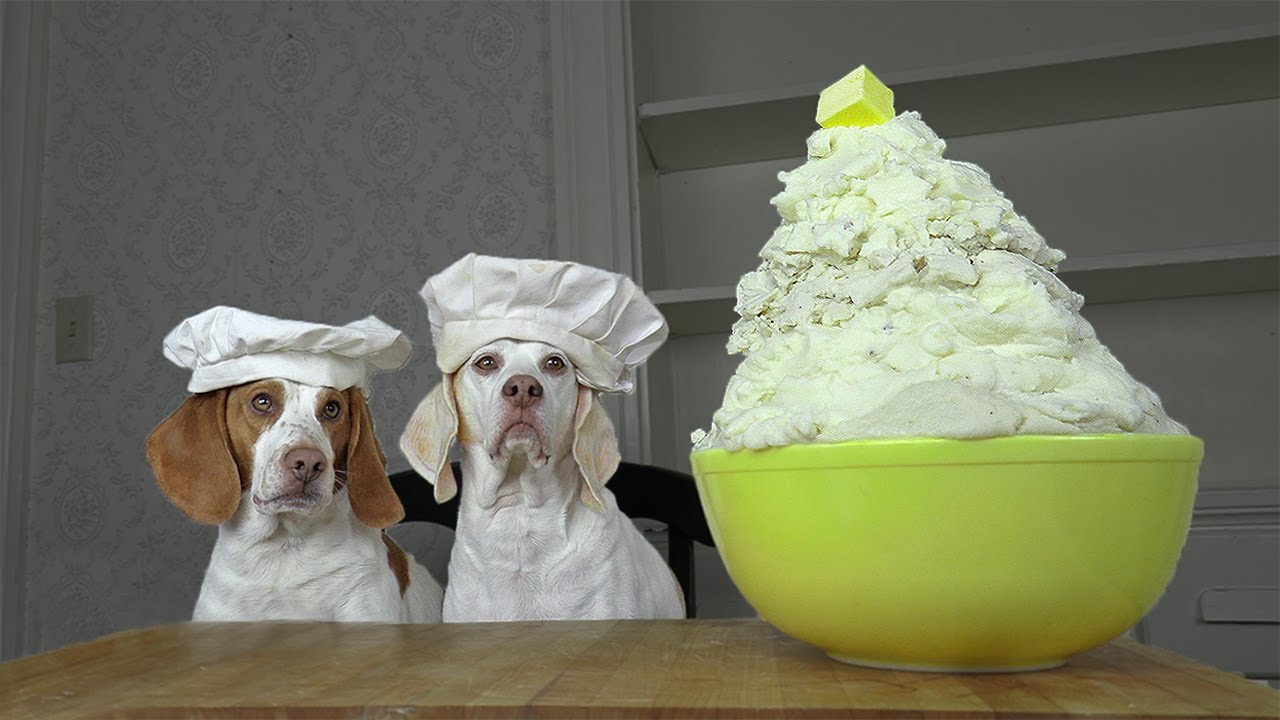 Dogs Make Mashed Potatoes: Chef Dog Maymo Shows How to Make Tasty Mashed Potatoes Recipe