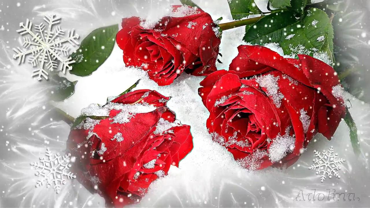 Rote Rosen Im Schnee... - YouTube