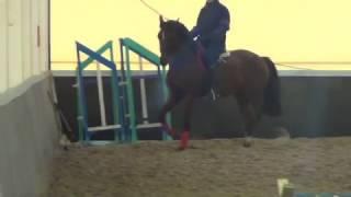 Конный спорт обучение. Упражнения для равновесия и гибкости. Кизимов Михаил