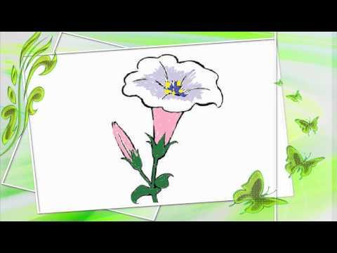 ระบายสีดอกไม้ - วิดีโอสำหรับเด็ก