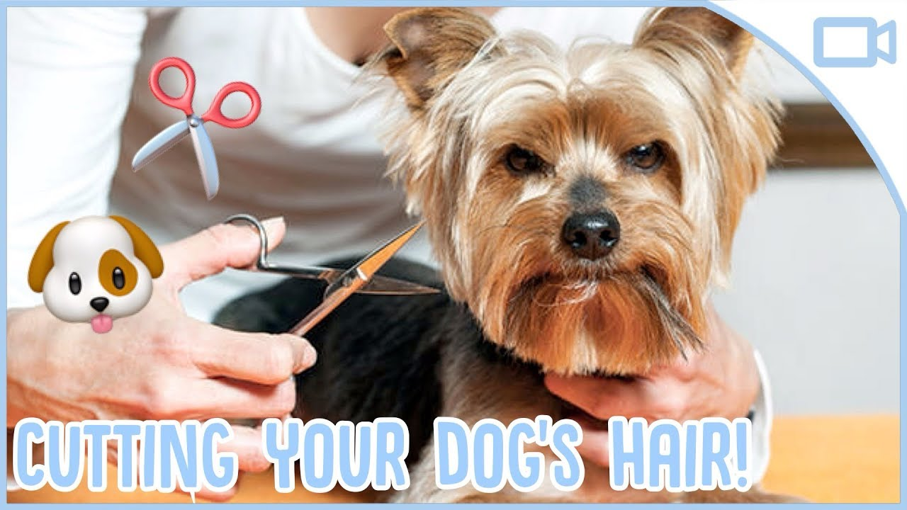 How to Cut Your Dogs Hair at Home!