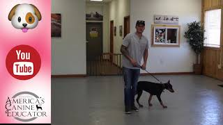 Stop leash pulling in 3 Easy steps Ep-1 Dog Training with America's Canine Educator