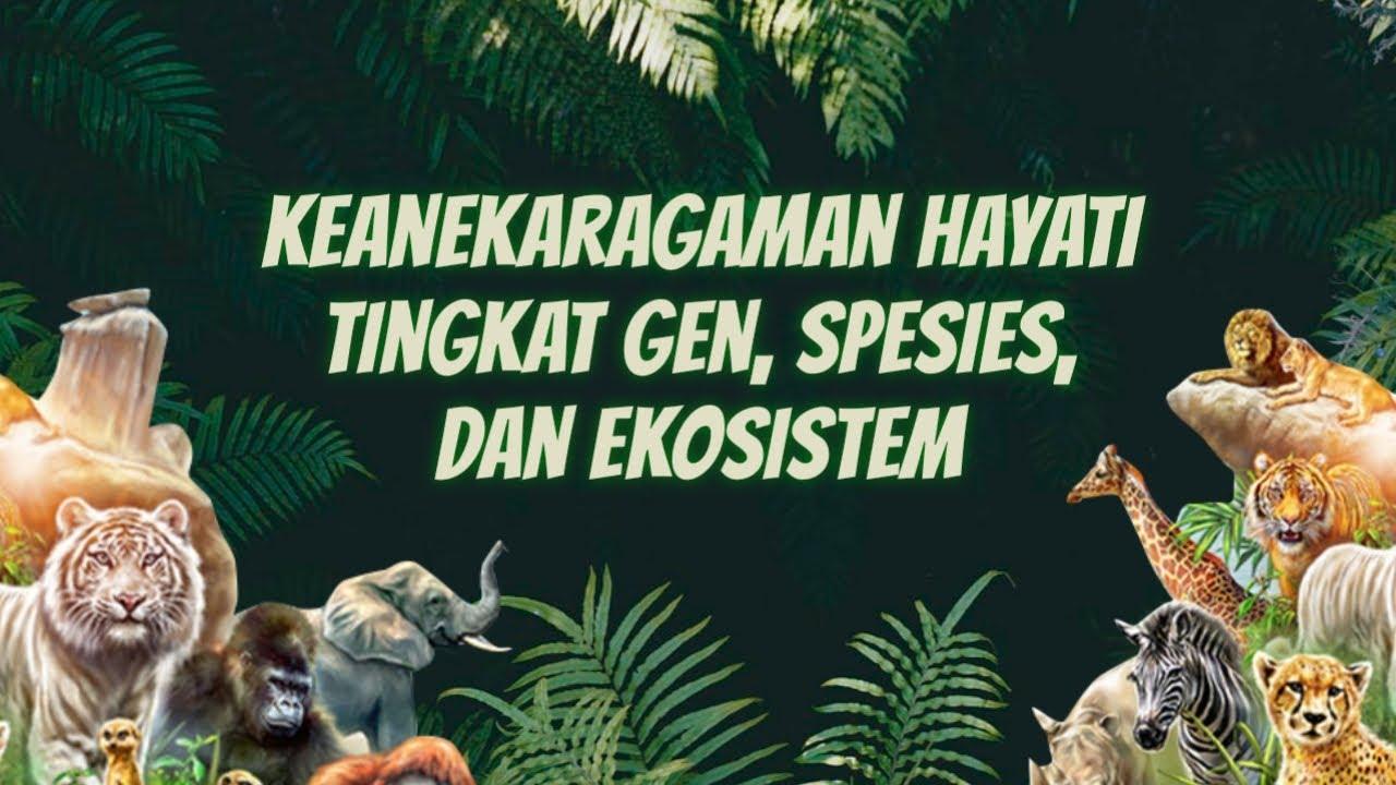 Keanekaragaman Hayati Tingkat Gen Spesies Dan Ekosistem Dunia Biologi Youtube