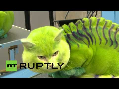 Groomers Make a Dragon-Cat and a Bee-Dog