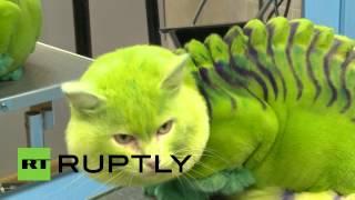 Кошка-дракон: в Екатеринбурге набирают моду «раскрашенные» питомцы