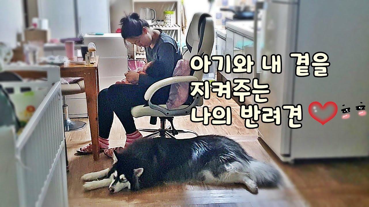 강아지와 육아 브이로그ㅣ발톱 깎는 날ㅣ아기 돌보는 말라뮤트