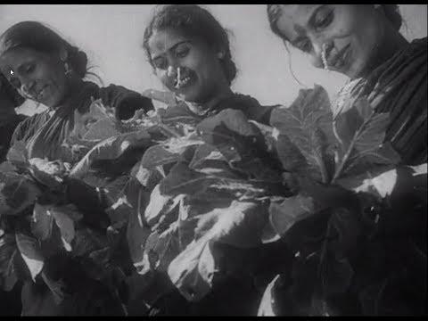 In Rural Maharashtra (1945)