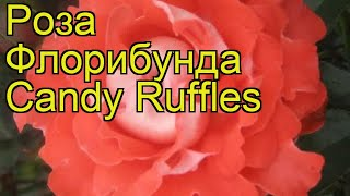 Роза флорибунда Кэнди Раффлз. Краткий обзор, описание характеристик Candy Ruffles