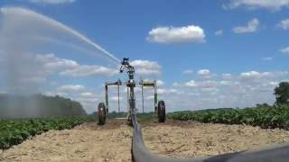 Irrigating Green Beans at Less Farms in Greenford Ohio