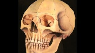 Papercraft - How to make skull for halloween decoration