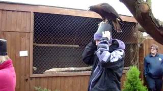 Fallowfields Falconry - Caracara Agility Training Course