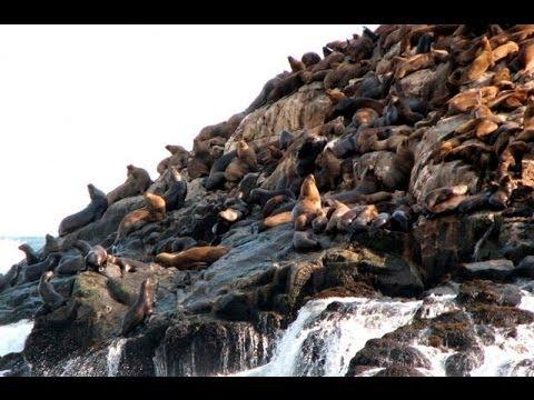 Callao: Conozca los encantos de las Islas Palomino
